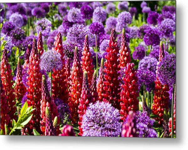 Red And Purple #2 Metal Print by Gerry Walden
