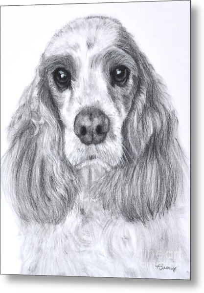 Red And White Cocker Spaniel Metal Print
