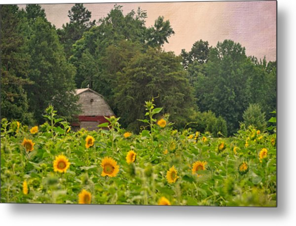 Red Barn Among The Sunflowers Metal Print