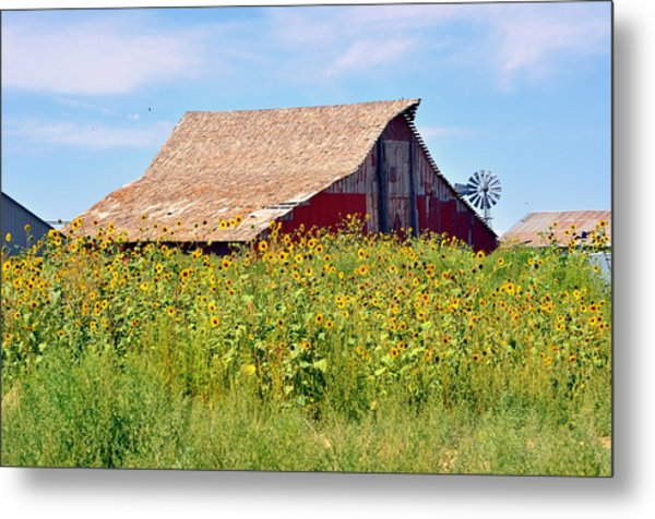 Red Barn In Summer Metal Print