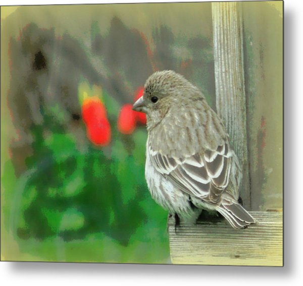 Red Behind Little Beak Metal Print