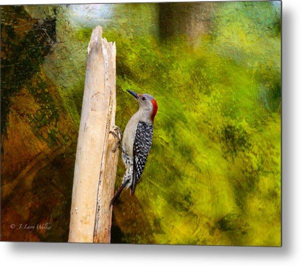 Red-bellied Woodpecker Happily Pecks Metal Print