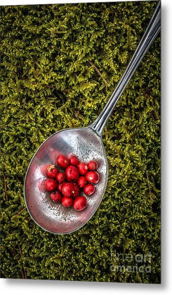 Red Berries Silver Spoon Moss Metal Print