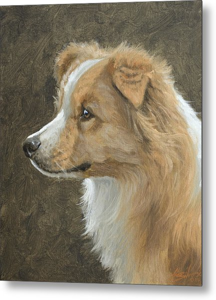 Red Border Collie Portrait Metal Print