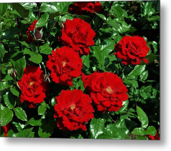 Red Brilliance Metal Print