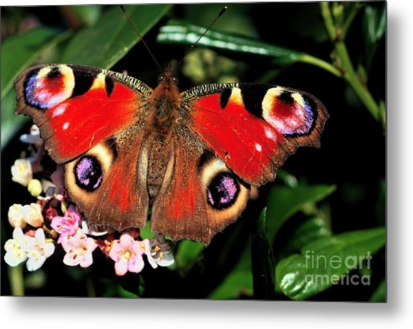 Red Butterfly In The Garden Metal Print