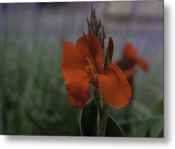 Red Canna Metal Print by Martha Burger