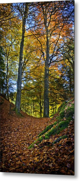 Red Carpet In Reelig Glen During Autumn Metal Print