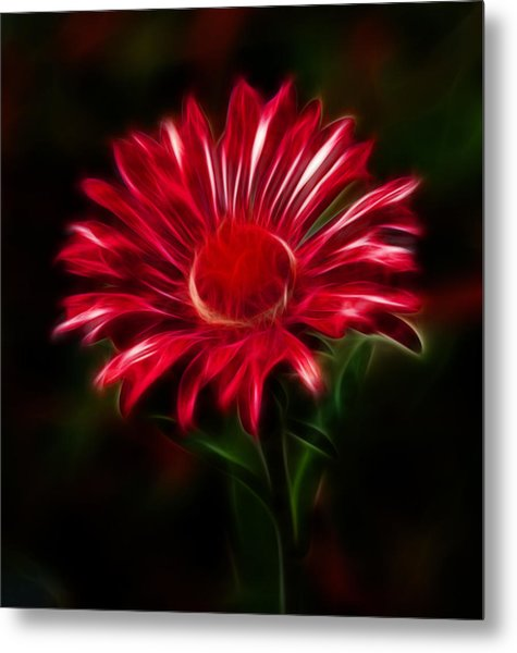 Red Daisy Metal Print