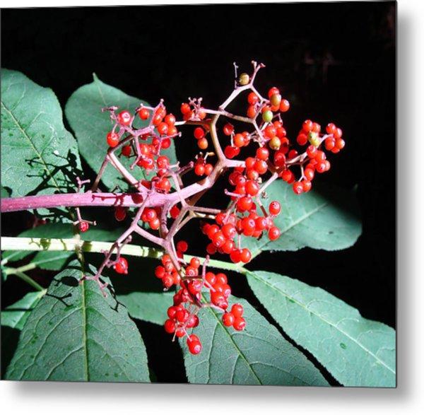 Red Elderberry Metal Print