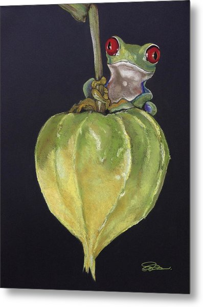 Red-eyed Tree Frog On Seed Pod Metal Print