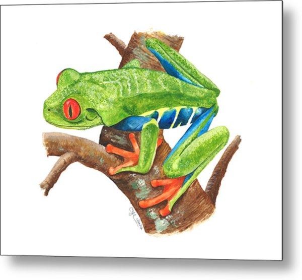 Red-eyed Treefrog Metal Print