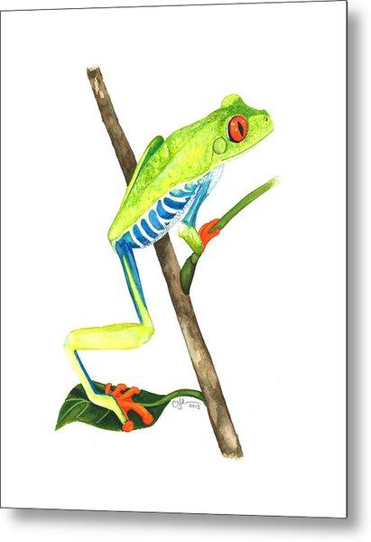 Red-eyed Treefrog From La Selva Metal Print