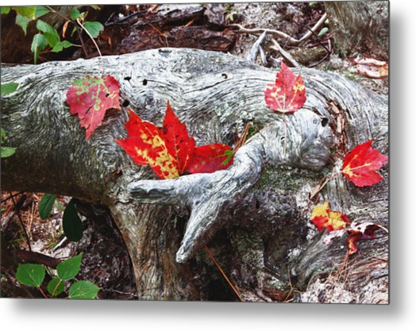 Red Fall Against Grey Metal Print
