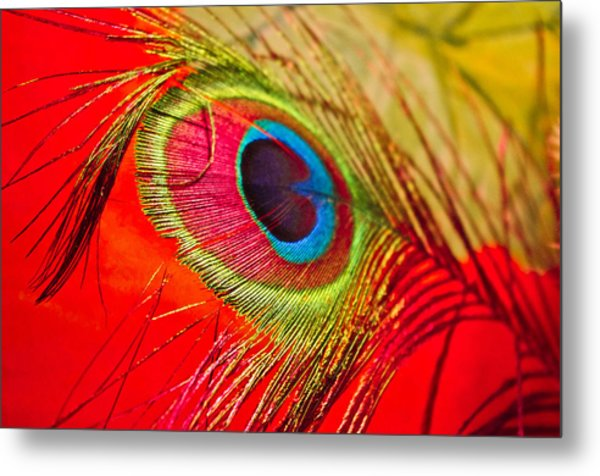 Red Feather Metal Print