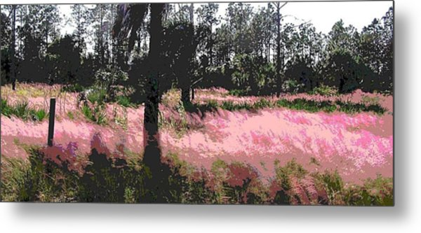 Red Fire Grass Field Gulf Coast Florida Metal Print