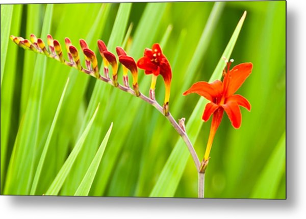 Red Flower Family Metal Print