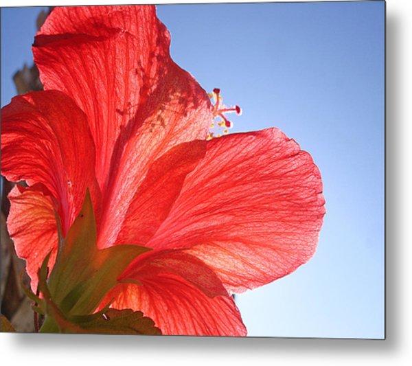 Red Flower In The Sun By Jan Marvin Studios Metal Print