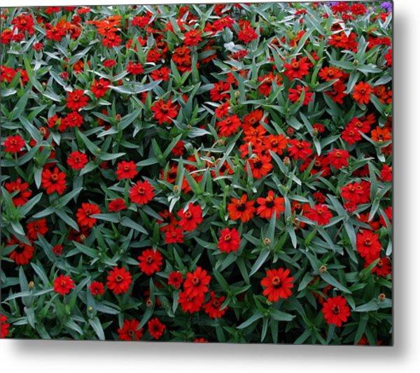 Red Flowers Metal Print