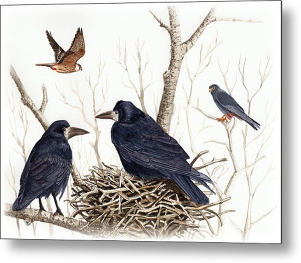 Red-footed Falcon Metal Print by Deak Attila