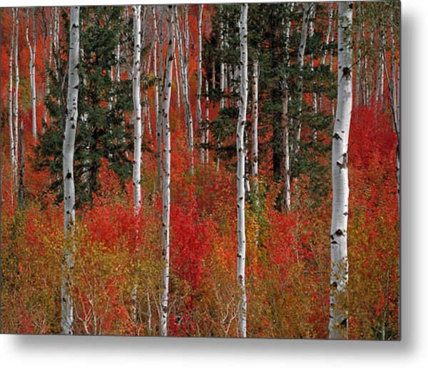 Red Forest Metal Print by Leland D Howard