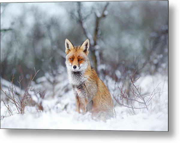 Red Fox Blue World Metal Print