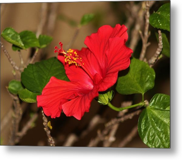 Red Hibiscus Flower Metal Print