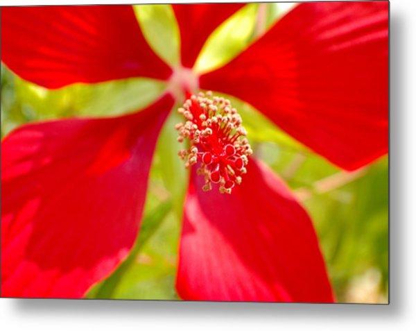 Red Hibiscus Flower Metal Print