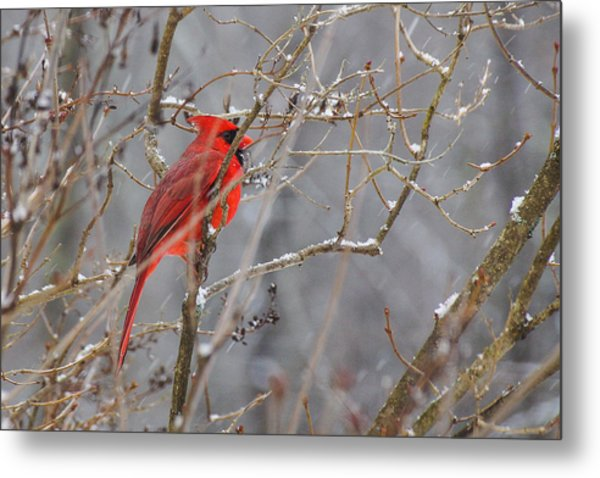 Red Hot In A Snowstorm Metal Print