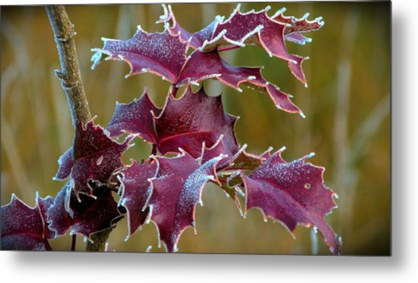 Red In Rime Metal Print