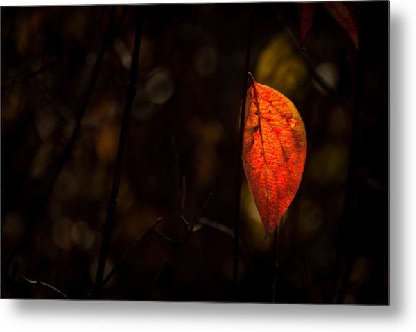 Red Leaf 2 Metal Print