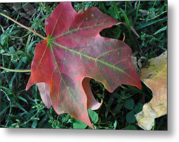 Red Leaf Metal Print