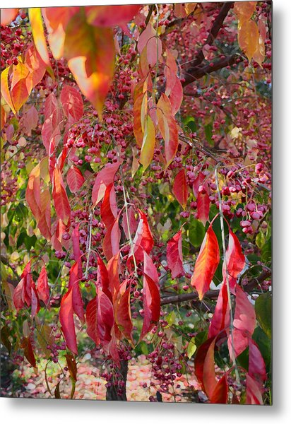 Red Leaves And Berries Metal Print