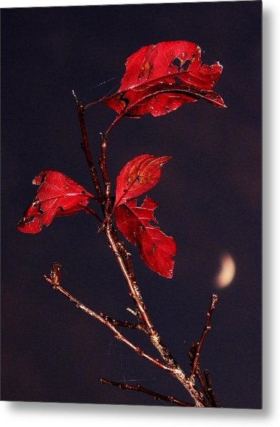 Red Leaves And Fading Moon Metal Print
