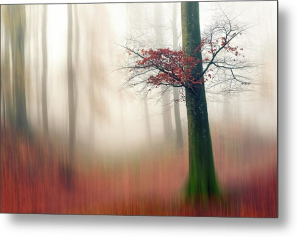 Red Leaves And The Hidden Path. Metal Print