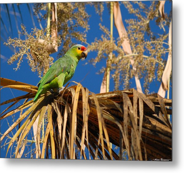 Red-lored Amazon In Palm Metal Print