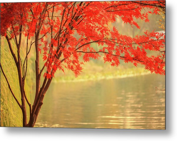 Red Maple Besides River Metal Print by Uschools