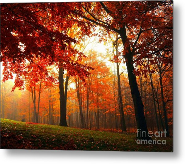 Red Maple Forest Metal Print