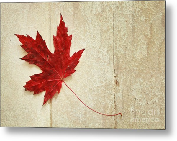 Red Maple Leaf Metal Print by Isabel Poulin