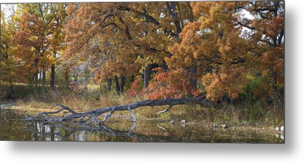 Red Oaks On The Shore Metal Print