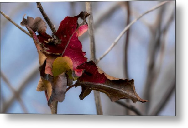 Red Over Branch Metal Print