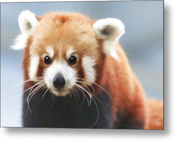 Red Panda Staring Metal Print