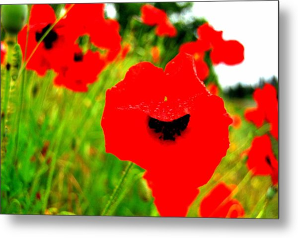 Red Poppies Metal Print by Mamie Gunning