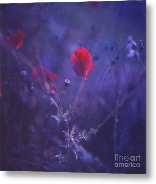 Red Poppy In Blue Medium Format Analog Hasselblad Film Photo Metal Print by Edward Olive