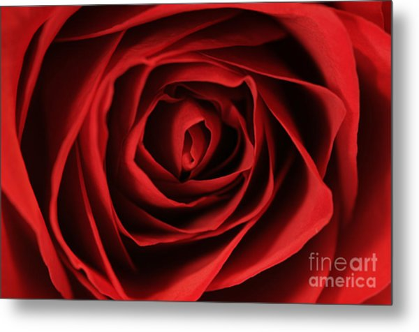 Red Rose 2 Metal Print
