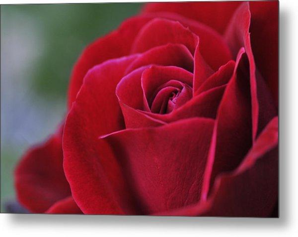 Red Rose Close 1 Metal Print