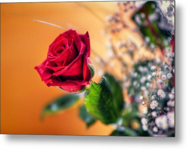 Red Rose Of Love Metal Print