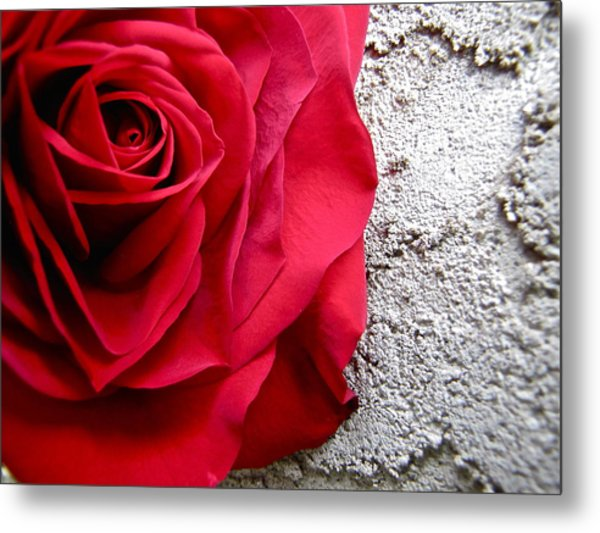 Red Rose On Wall Metal Print