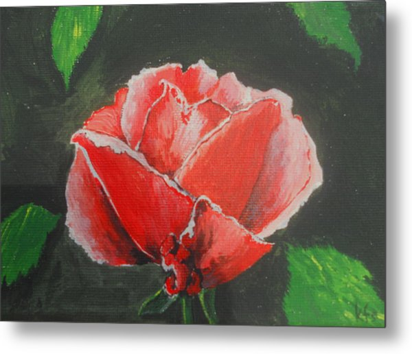 Red Rose Study Metal Print