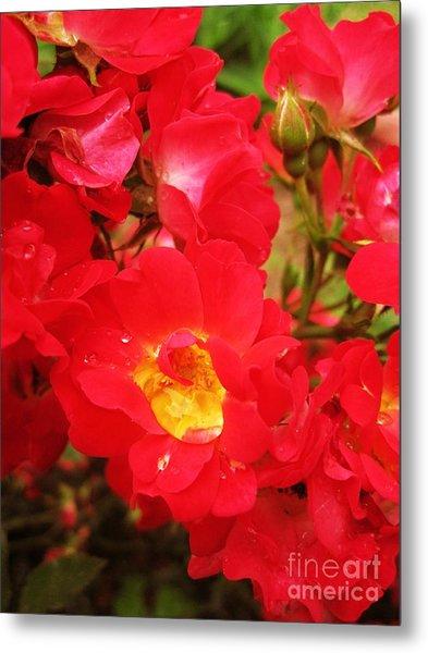 Red Roses And Raindrops Metal Print